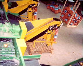 Semi automatic net weighing machine attached to grade conveyor