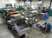 Vegetable packing line