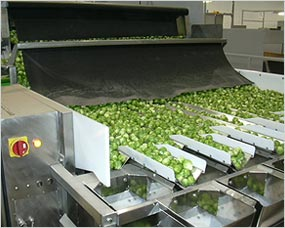 Sprout packing system