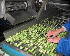 Roller inspection table for sorting sprouts and removal of waste