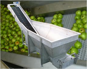Stainless Steel Potato And Veg Handling Machinery And