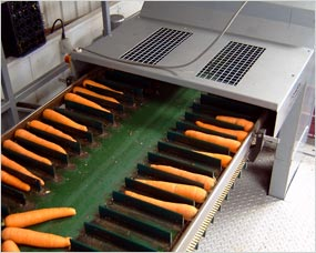 Carrot topping conveyor system