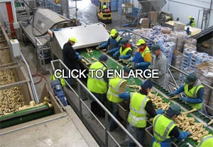Bin tippler feeding packing line with product flow control system